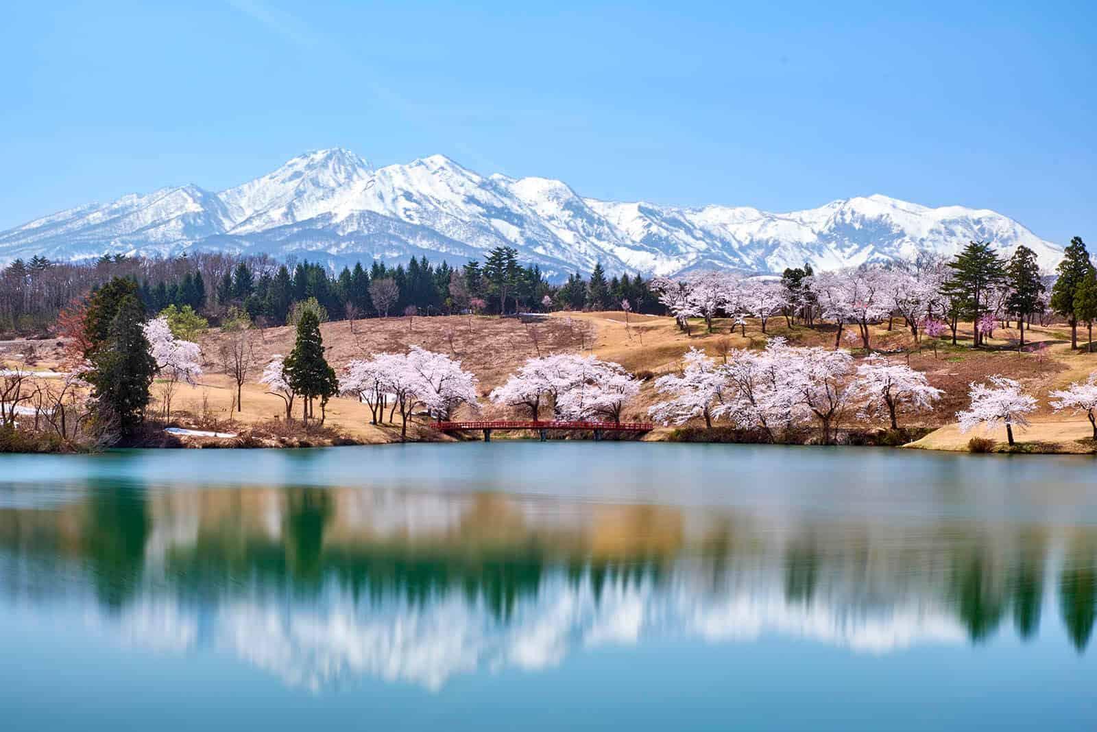 matsugamine cherry blossoms