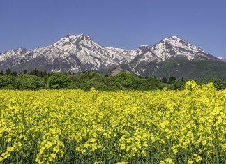 daidohara flower fields