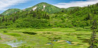 Summer Koya Pond