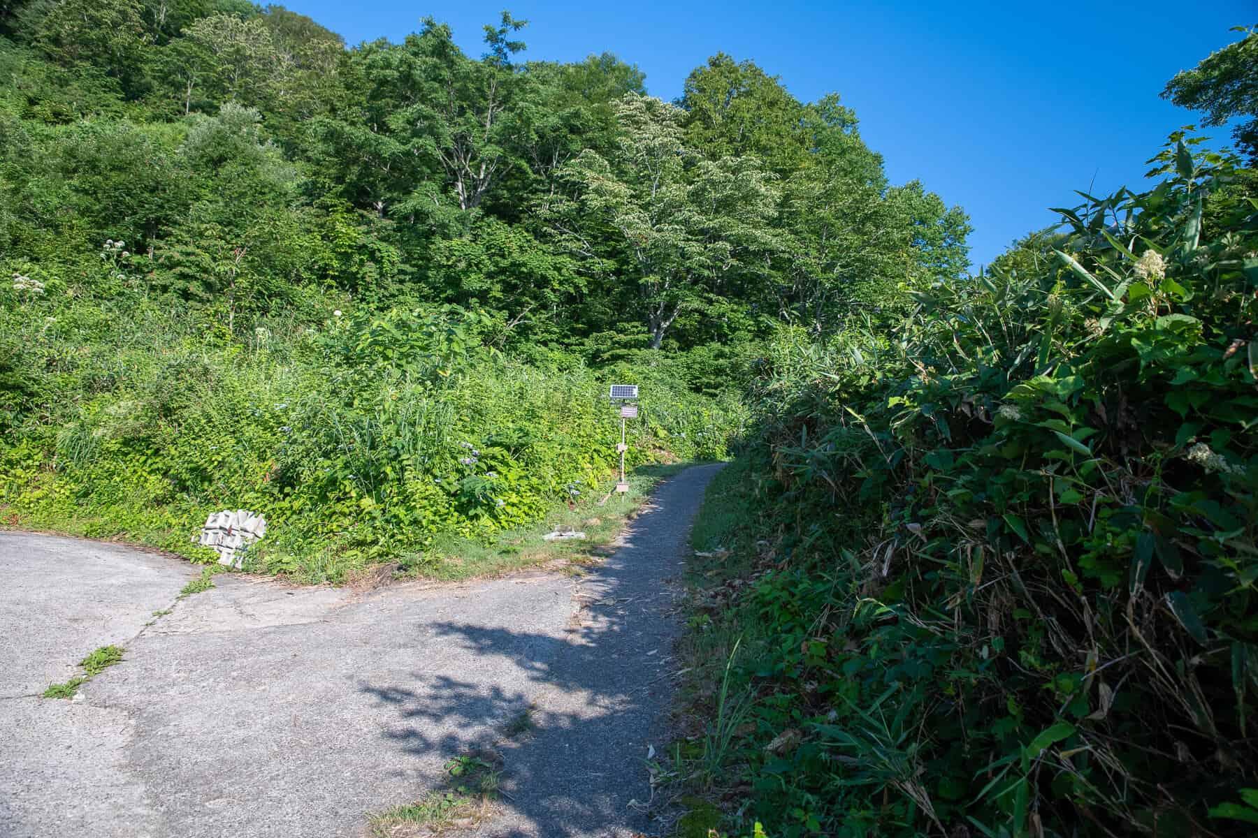 Mt Myoko Trail