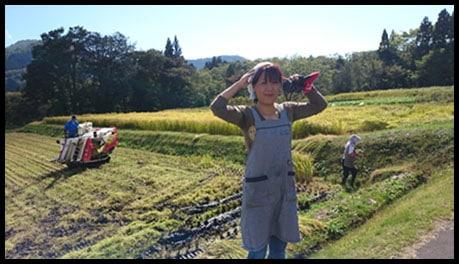 shibatas rice