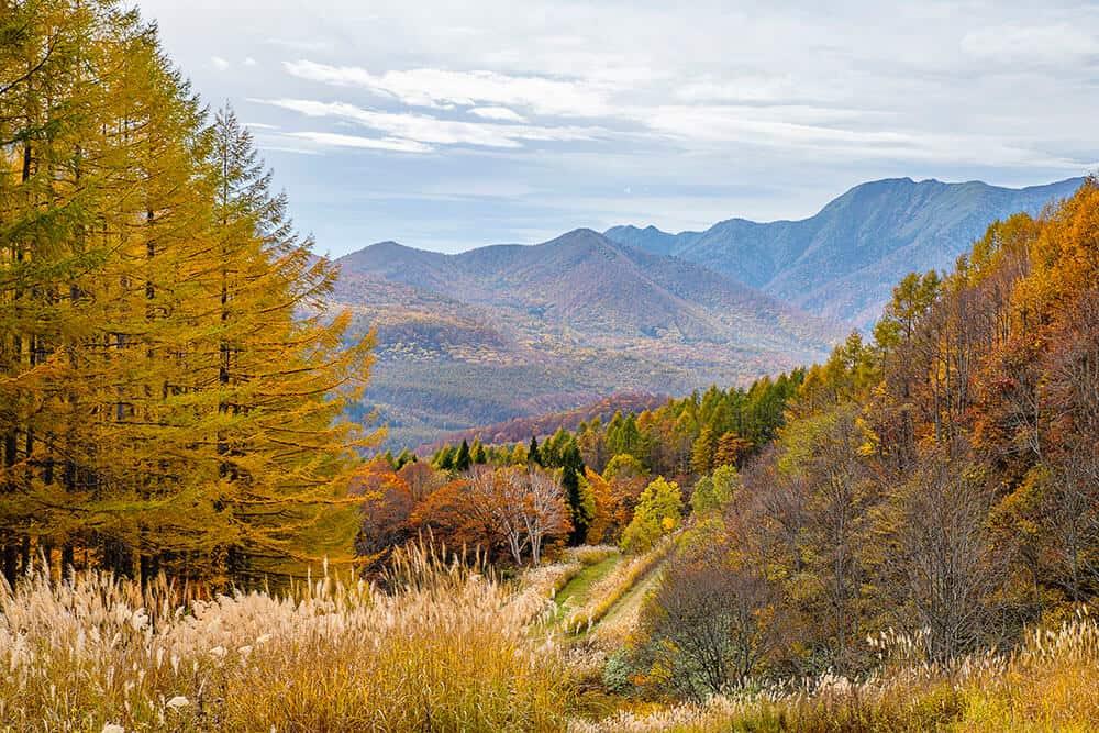 suginohara autumn