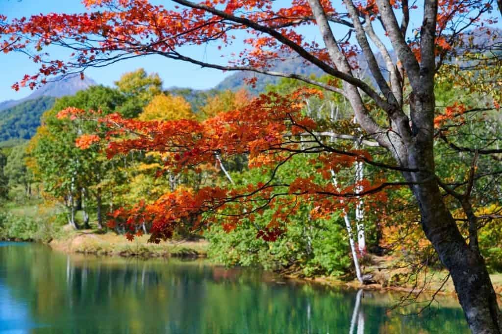 Sasagamine Autumn