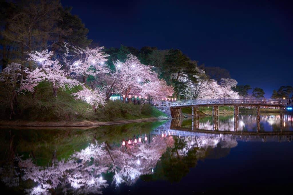 Takada Park cherry blossoms at night